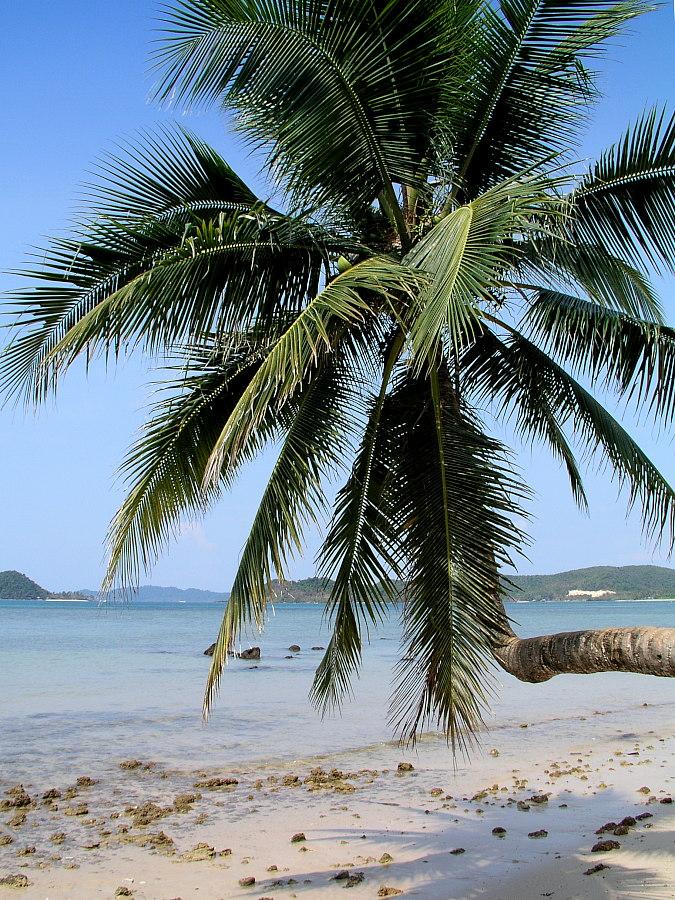 Monkey Island Koh Mak